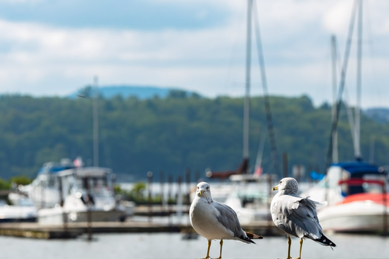 gulls and boats in cold spring