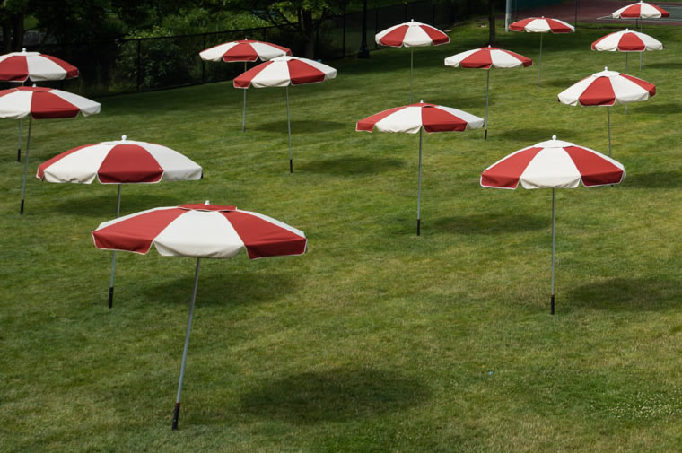 umbrellas in field