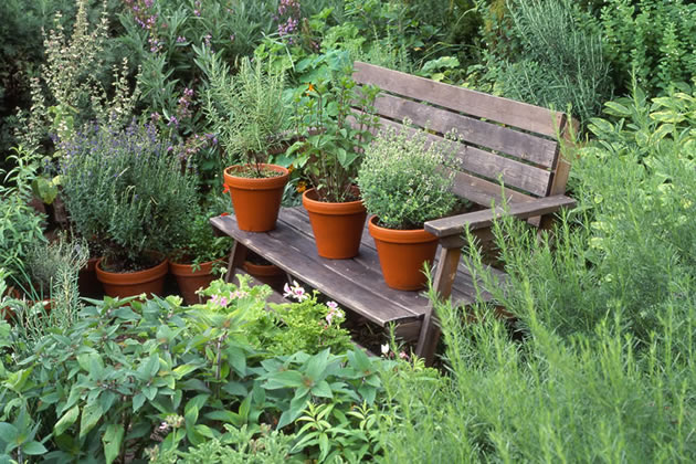 space to grow herb garden